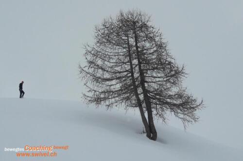 Bernina2020-011
